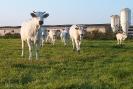 Biodynamic Farms_2