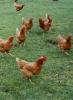 Biodynamic Farms_4
