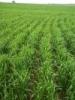 Biodynamic Farms