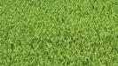 Biodynamic Soils_2